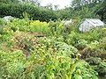 Allotments in Woodside - geograph.org.uk - 1462249.jpg