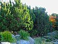 Alpine Garden (Montreal Botanical Garden) 10.jpg