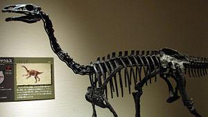 Alxasaurus - Mounted skeleton