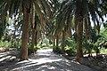 Amilcar, Carthage, Tunisia - panoramio (20).jpg