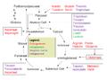 Aminohapete katabolismi üldine skeem.png