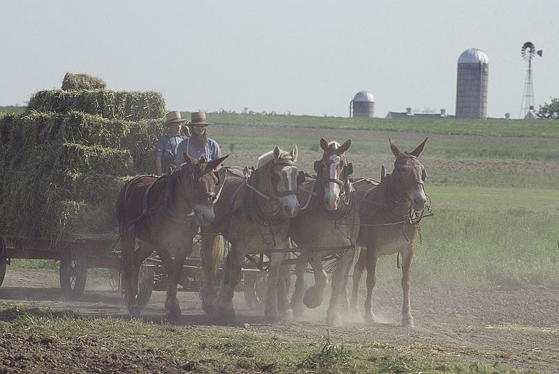 File:Amish life in Lancaster, 14680v.jpg