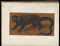 Animal drawings collected by Felix Platter, p2 - (124).jpg