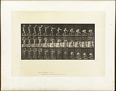 Animal locomotion. Plate 201 (Boston Public Library).jpg