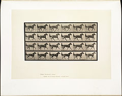 Animal locomotion. Plate 614 (Boston Public Library).jpg