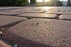Ants at Dishon village square.JPG