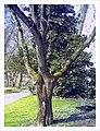 April Botanischer Garten Freiburg - Master Botany Photography 2013 - panoramio (12).jpg