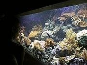 A saltwater aquarium.