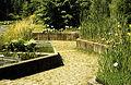 Aquatic plants in Zurich bot.garden 1989. 05.27.jpg