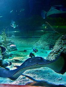 Aquarium of Western Australia - Wikipedia