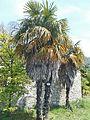 Arboretum Trsteno 08.jpg