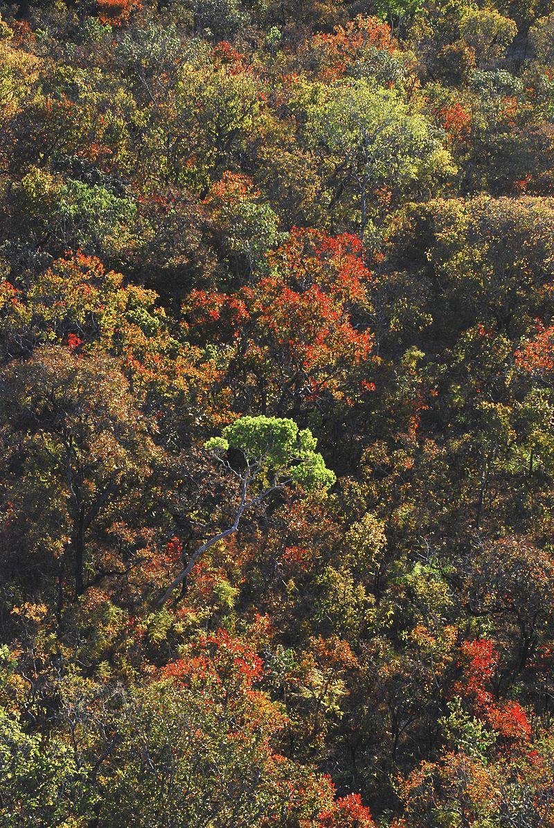 Arvores do Cerrado.jpg