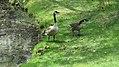 Assiniboine Park Zoo, Winnipeg (480464) (9447762812).jpg