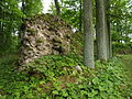 Asti ordulinnuse müürid 03.JPG