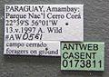 Atta laevigata casent0173811 label 1.jpg