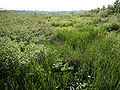 Auburn, Washington - view west from Interurban Trail 04.jpg