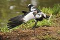 Austin Roberts Bird Sanctuary-053.jpg