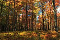 Autumn Tones (5) (9991491786).jpg