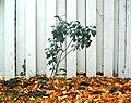 Autumn zen (768749).jpg