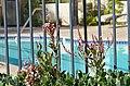 Avenue of the Arts Wyndham Hotel Address, 3350 Avenue of the Arts, Costa Mesa, CA 92626 Phone-(714) 751-5100 - panoramio (41).jpg
