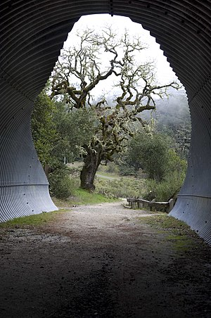 Bay Area Ridge Trail - Tunnel to Alpine Lake in Marin County