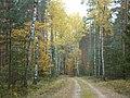 BRZEZINY - PIECZYSKA 19 - panoramio.jpg
