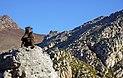 Baboon @ Steenbras River Gorge 5.jpg