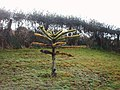 Baby Monkey Puzzle Tree In Barbour Cemetery - geograph.org.uk - 760982.jpg