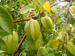 meaning of carambola