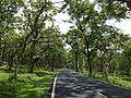 Bandipur National park road.jpg