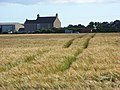 Barley, Abbeytown - geograph.org.uk - 901027.jpg