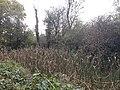 Basingstoke Canal, Up Nately 02.jpg