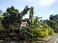 Batangasjf9998 19.JPG