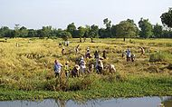 Image illustrative de l'article Économie du Cambodge