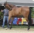 Bay Horse (2902721873).jpg