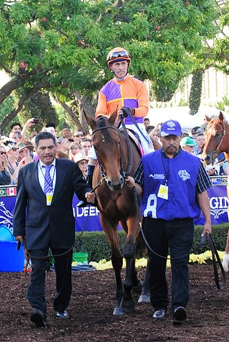 Beholder (horse) - Beholder in the walking ring for the 2016 Breeders' Cup Distaff