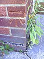 Benchmark on ^108 Weedon Road - geograph.org.uk - 2130862.jpg