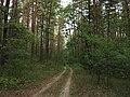 Berkovets forest4.jpg