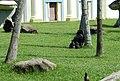 Beto Carrero Zoo - panoramio (2).jpg