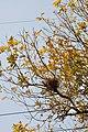 Bird Nest - Howrah 2011-02-13 1377.JPG