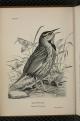 Birdcraft-0028.png