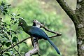 Birds of Eden-1468.jpg