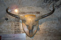 Bison skull.jpg