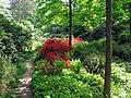 Blühende Azaleen im Seepark in Freiburg.jpg