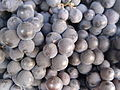 Black Grapes of Salem 2.jpg