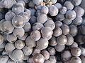 Black Grapes of Salem 2.jpg