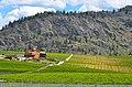 Black Sage Vineyards - panoramio.jpg