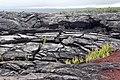 Black land - panoramio.jpg