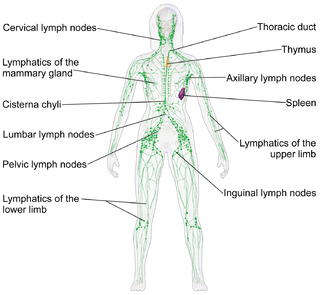 Lymphatic system a part of the defense system (immune system) of vertebrate animals against pathogens