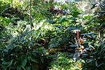 Bloedel Floral Conservatory, Queen Elizabeth Park - Vancouver, Canada - DSC07489.JPG